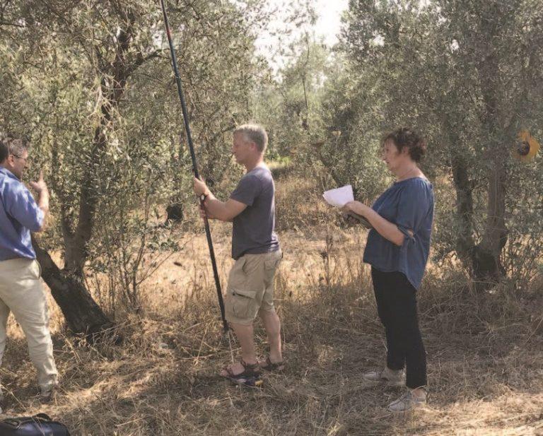 החוקרים האיטלקים והחוקר הישראלי מודדים את נפח העלווה המסייעת בקיבוע פחמן בכרם הזיתים של מומי גרטי בכפר בן נון