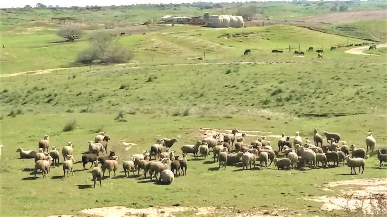 חוות מקנה דקל בנגב המערבי