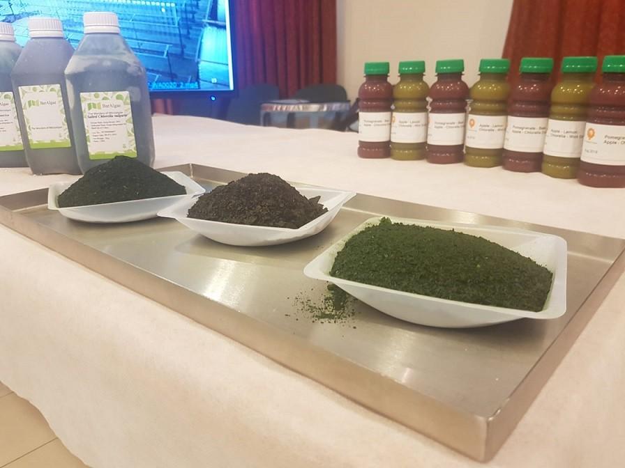 האצות על השולחן
