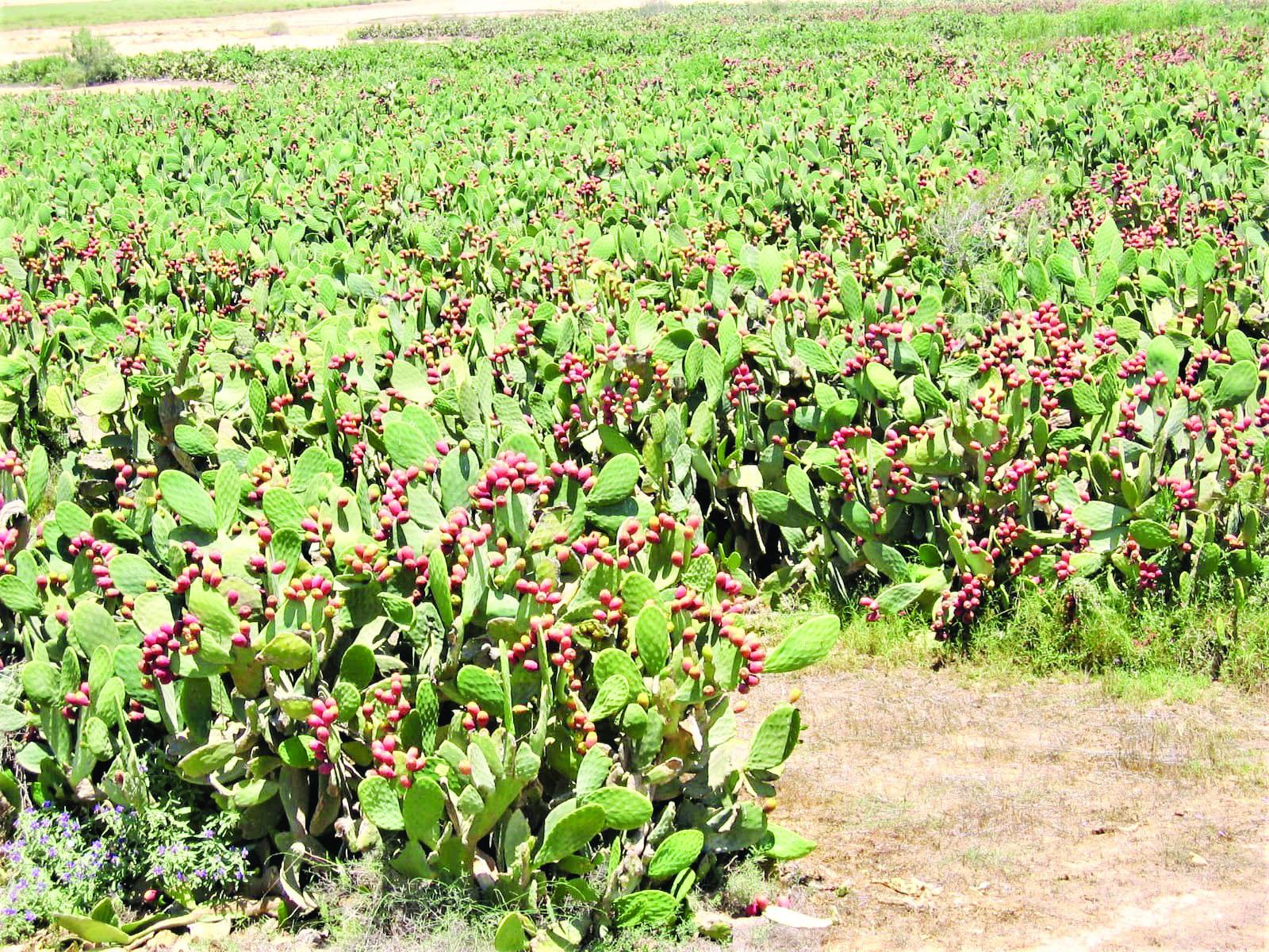 חוות צברי אורלי