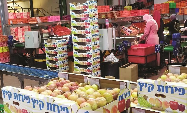 בית אריזה לתפוחים