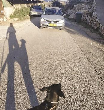 הכביש המסוכן בגבעת יערים אילוסטרציה
