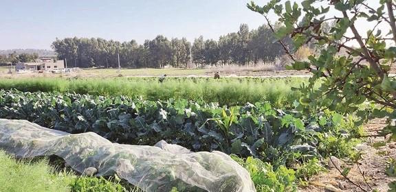 חוות קיימא נהלל