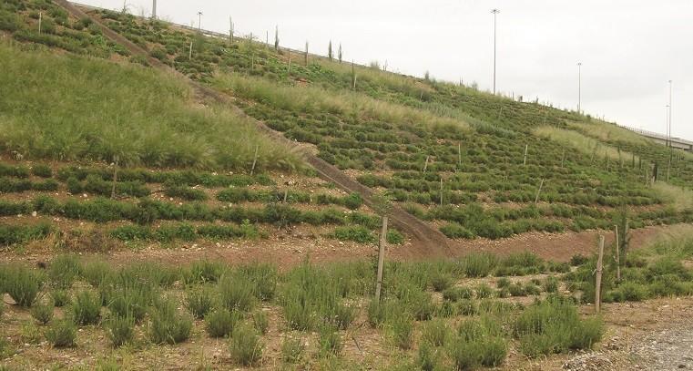 חישתיל חוקרת מפתחת מנביטה זרעים לחקלאות
