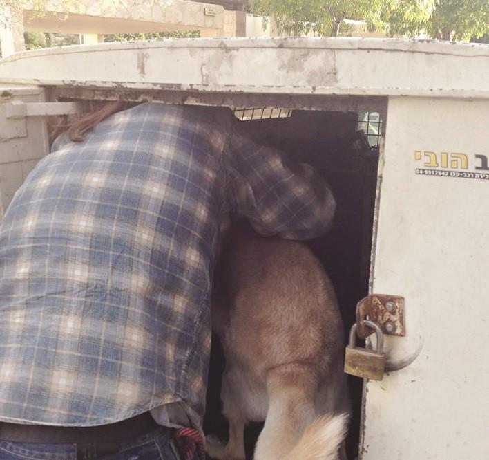 לוכד של המועצה מעמיס כלב משוחרר להסגר