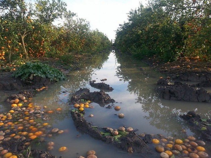 תפוזים לאחר סערה