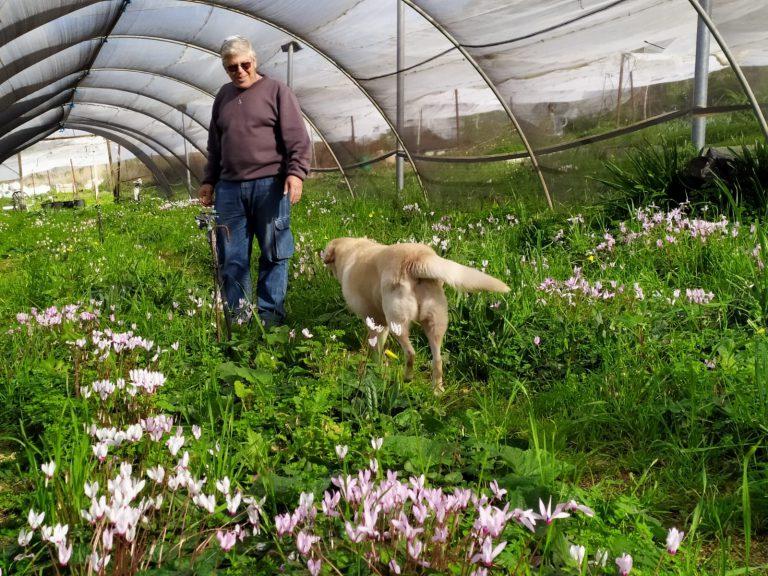 זרעים מציון צמחי בר בישראל