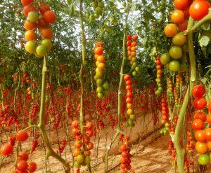 חקלאות בת קיימא