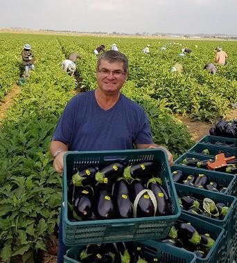 יעקב נוימן חקלאי מגדל חצילים