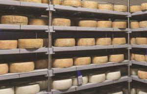 גבינות בחדר היישון של המחלבה שירת הרועים