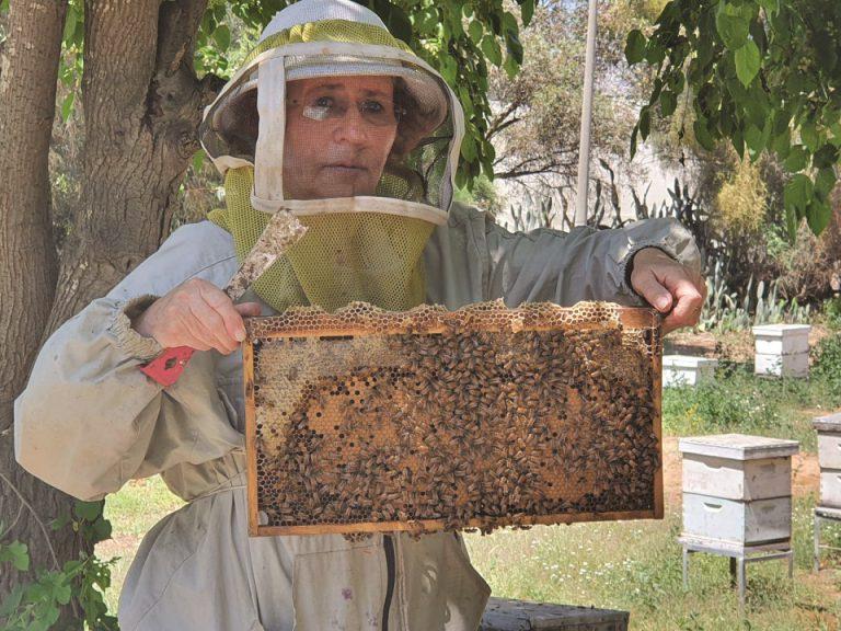 דר ויקי סרוקר חוקרת הדבורים שהקסימו אותה