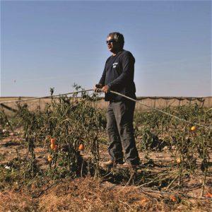ניסים סבן מפרק קווי השקיה במובלעת צופר