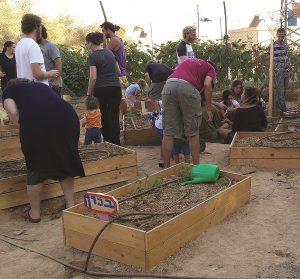 שתילת ירקות בערוגות גינה קהילתית