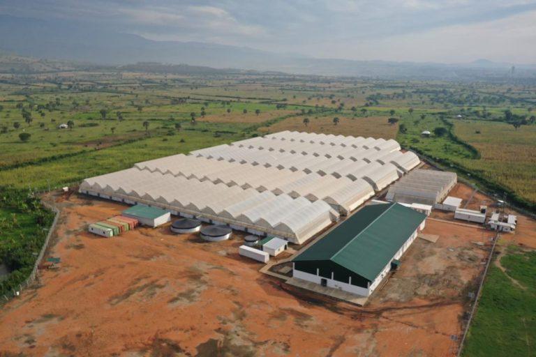 חוות טוגדר באוגנדה