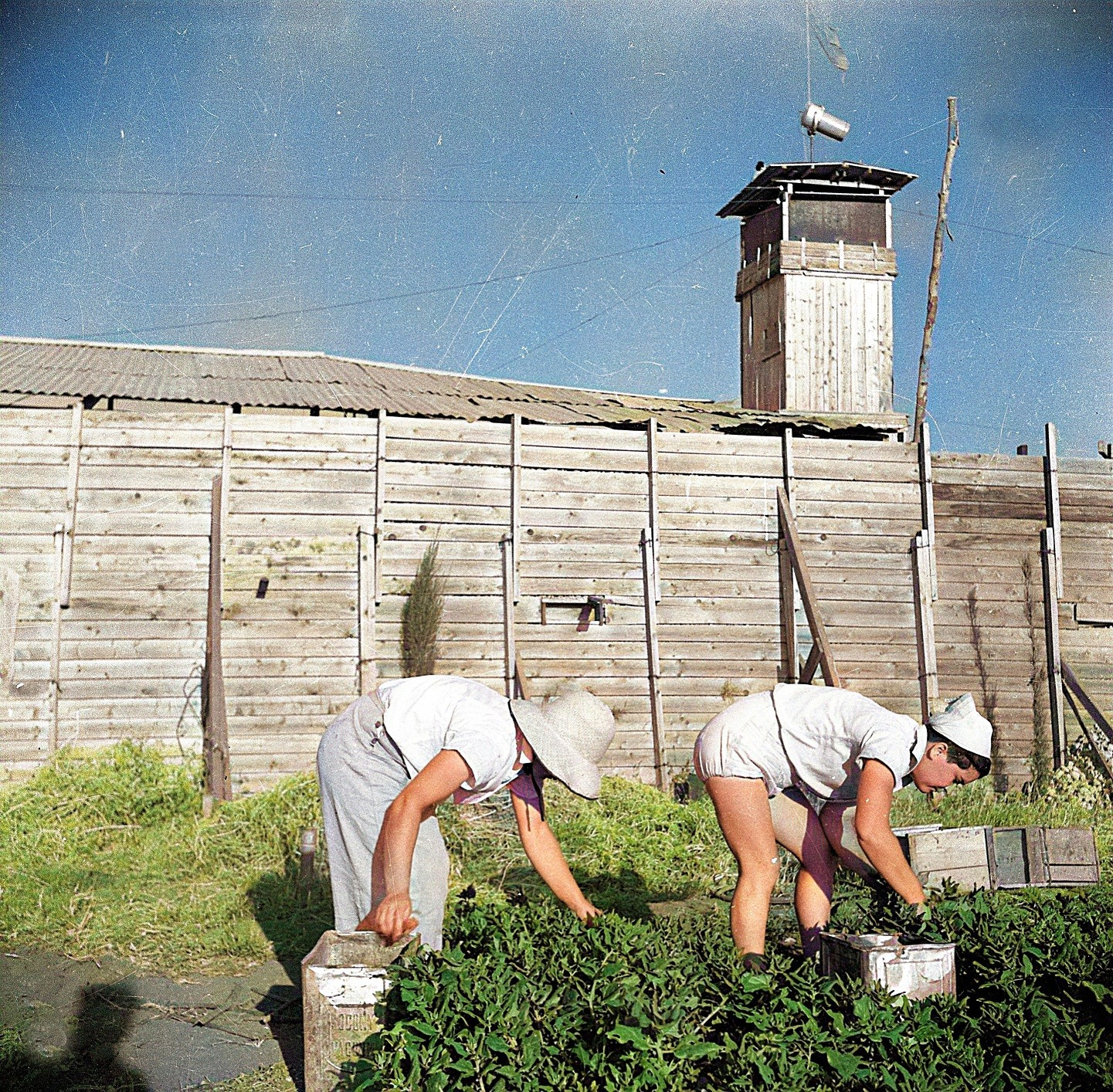 גן ירק מחוץ לחומה מימין מרקה שביילך שביל