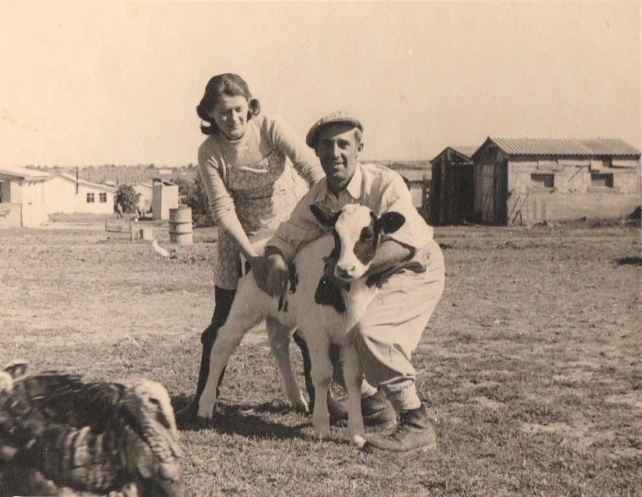 אלזה הצעירה עם אחד העגלים