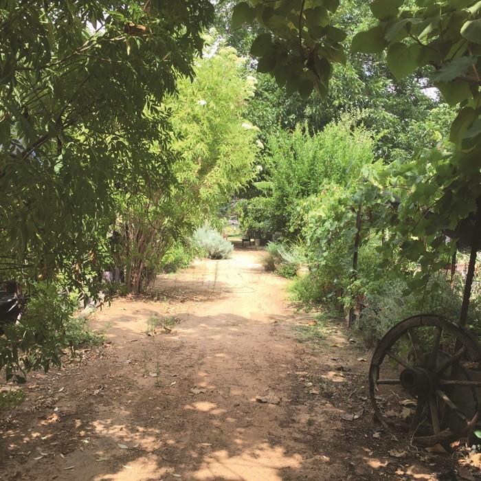 חוות תבלין בגן