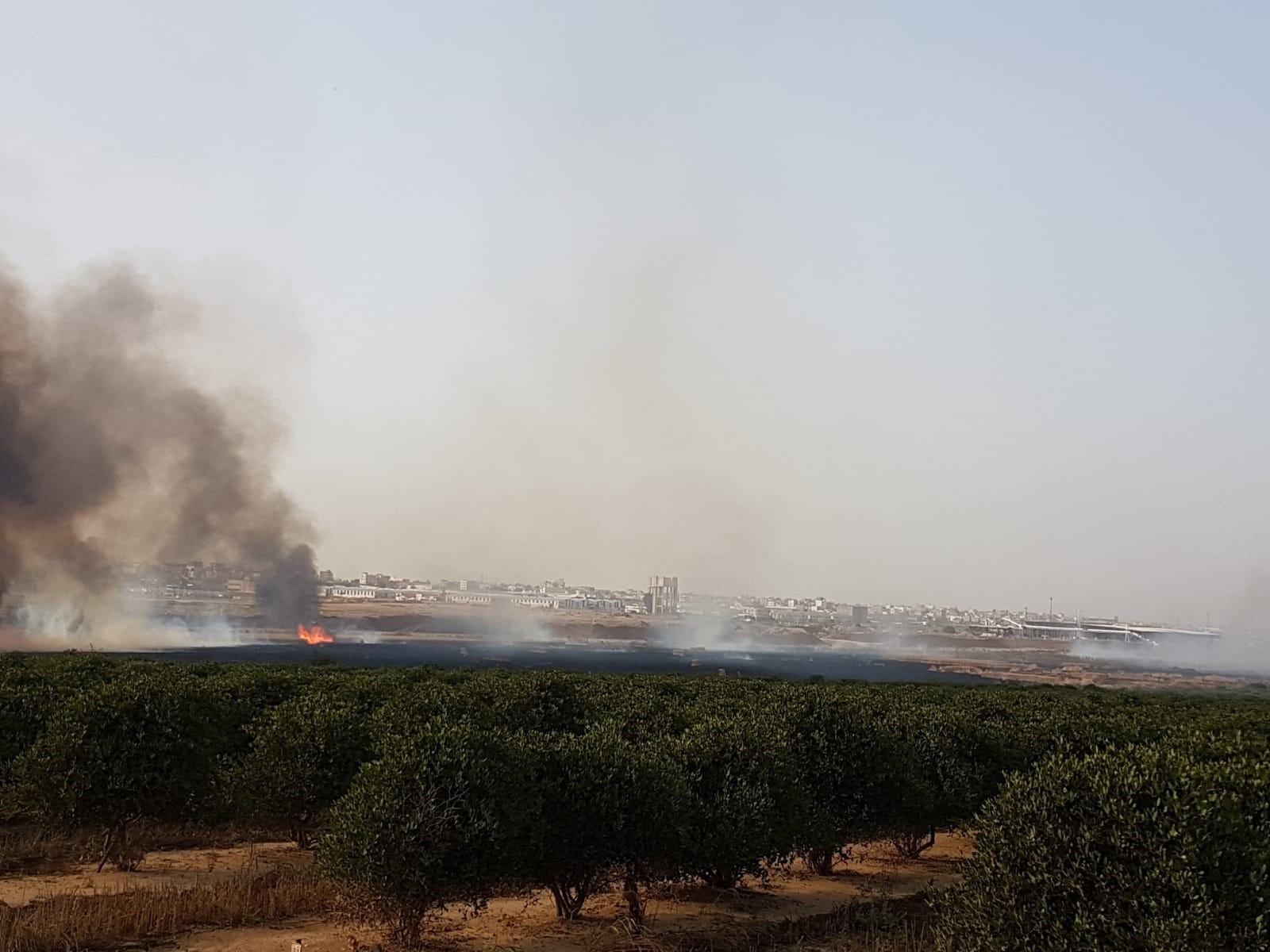 שריפה בשדות קיבוץ עלומים