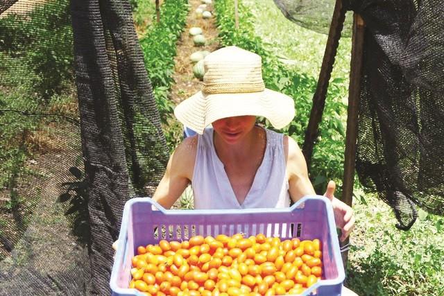 אלה שחף וארגז עגבניות שרי אורגניות