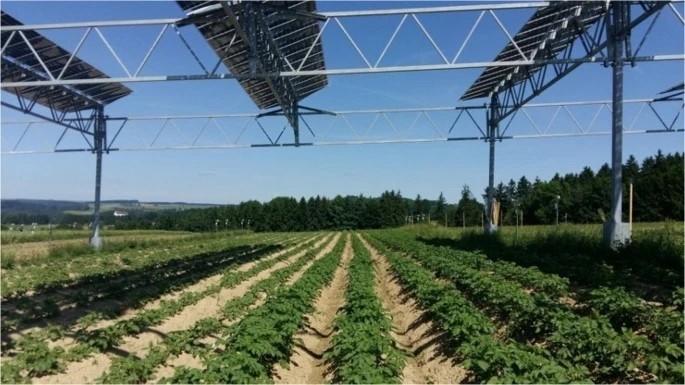 גידול תפוחי אדמה בגרמניה מתחת ללוחות פוטוולטאיים University of Hohenheim