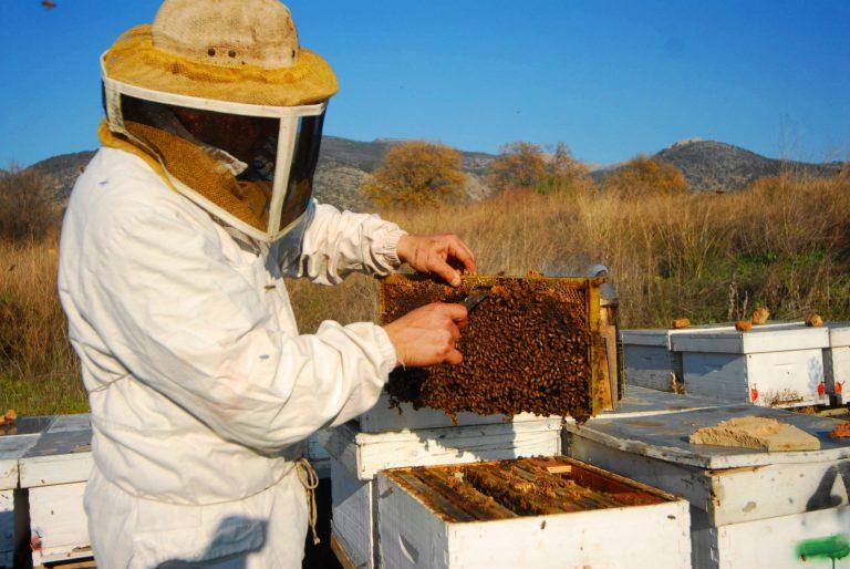 צילום מועצת הדבש