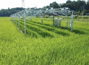 Solar Sharing dual use test site on paddy rice in Chiba Prefecture Japan