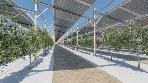 דוראל אנרגיה חקלאות אנרגיה סולארית