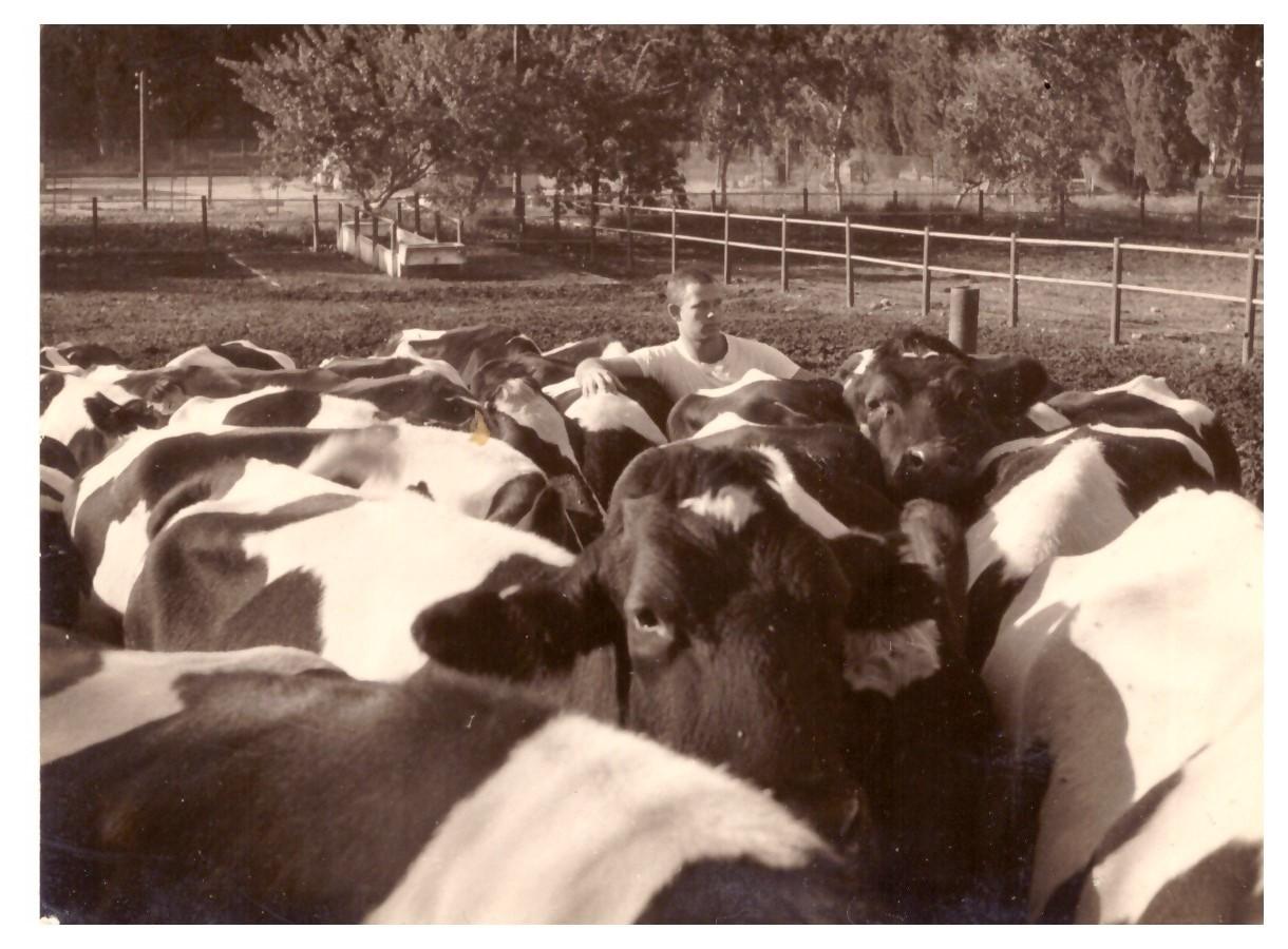 הנער משה עם פרות במקווה ישראל