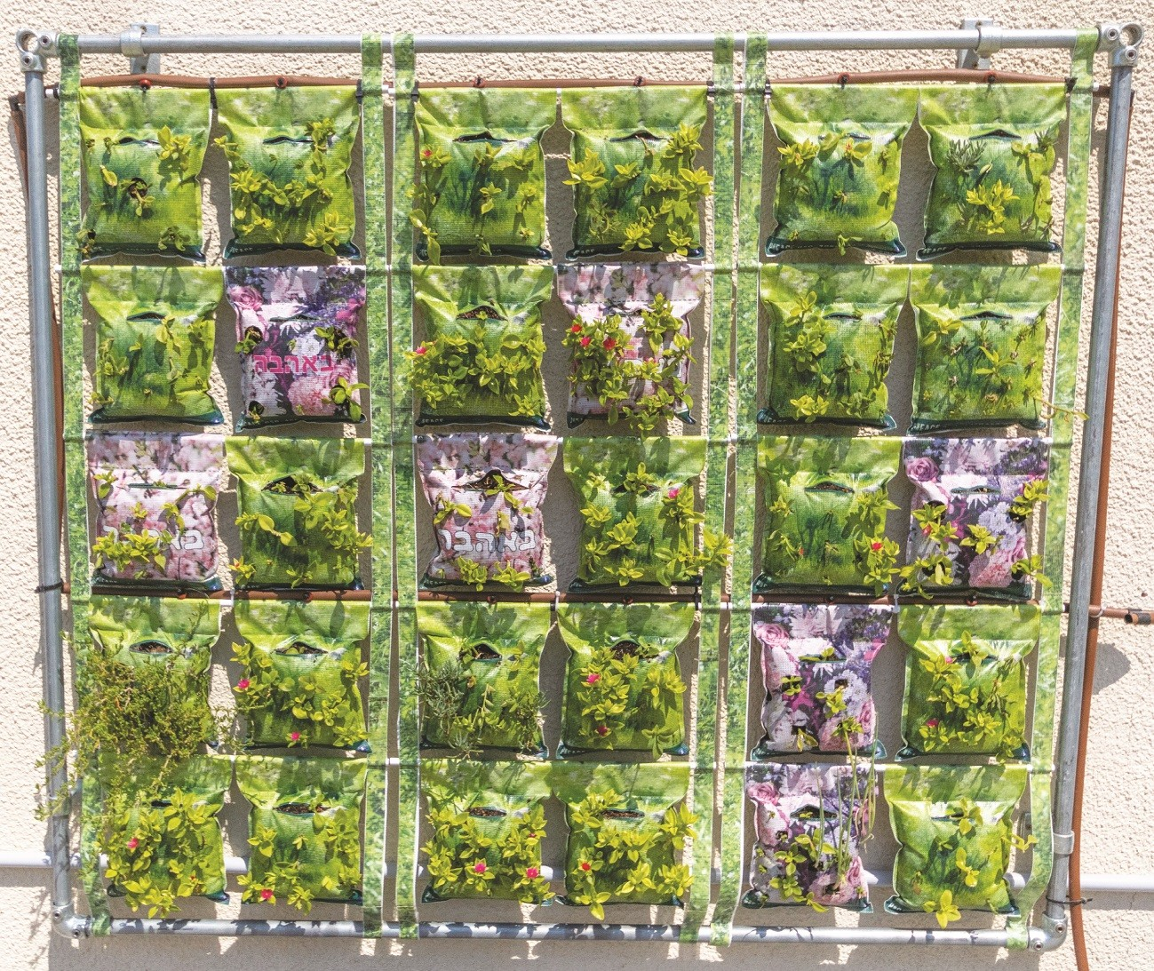 קיר ירוק של פיסב ירוקה