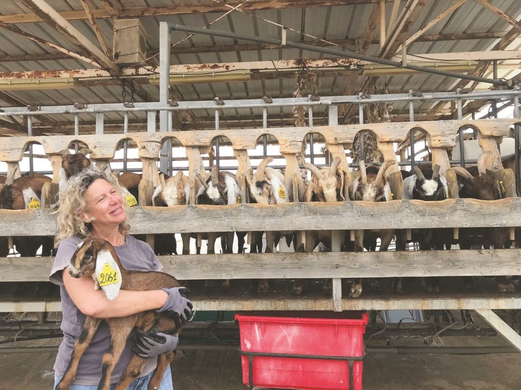 ענת קורנמל במכון החליבה של החווה
