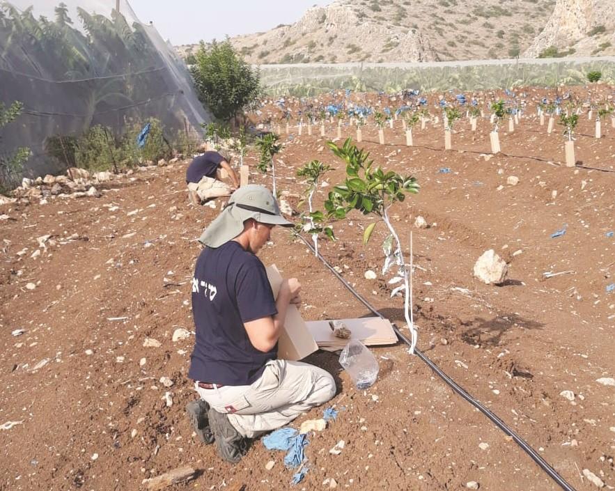 בשדה. שיקום דרך עבודה חקלאית