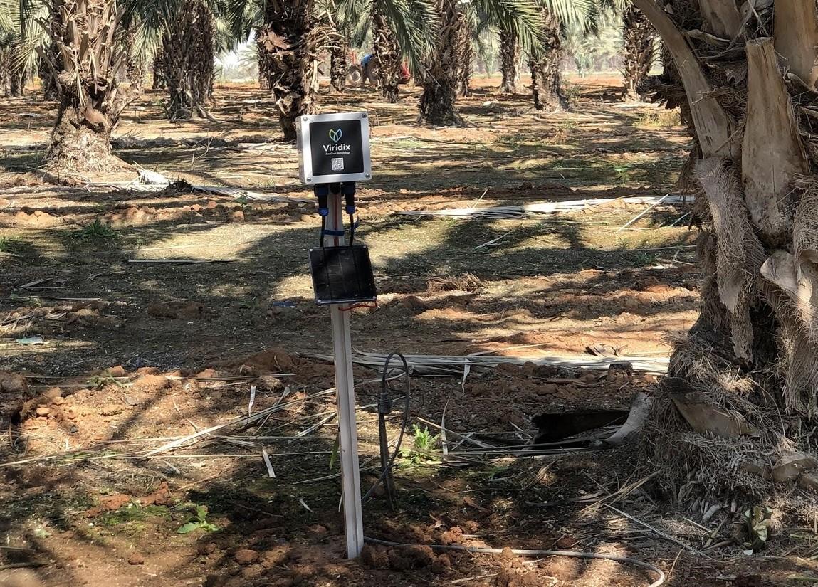 מערכת של וירידיקס להשקיה אוטונומית במטע תמרים בבקעה