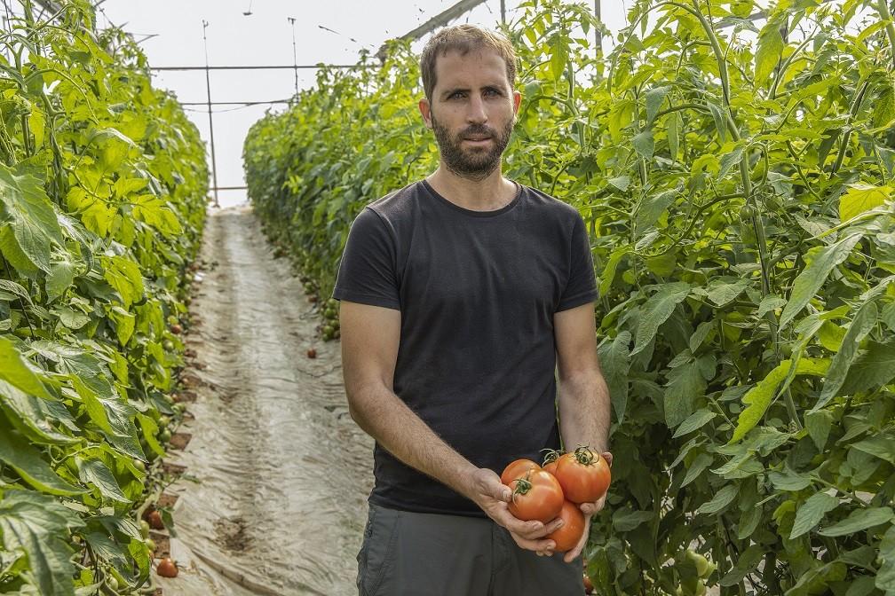 עגבניות מהזן לנסור