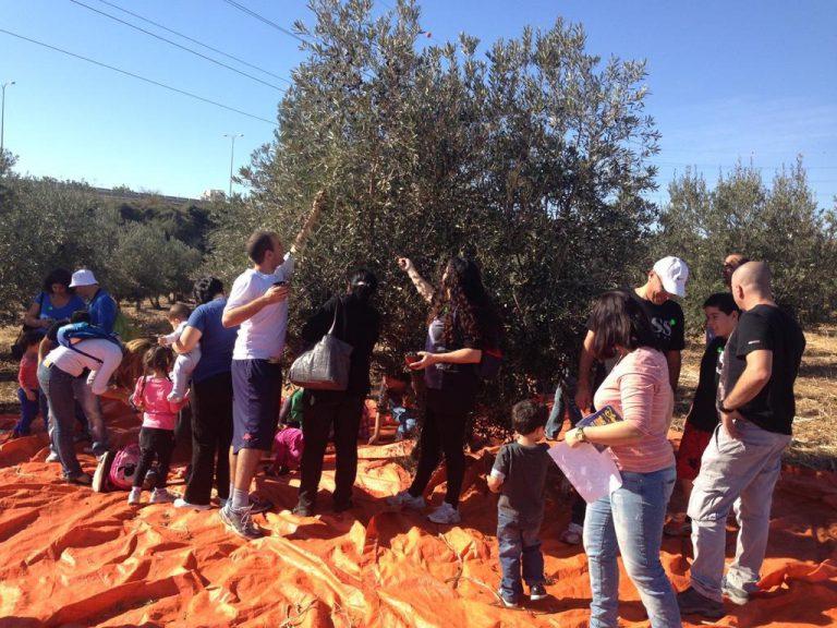 פעילות לקבוצה בחוות הזיתים אלדין בכפר רות