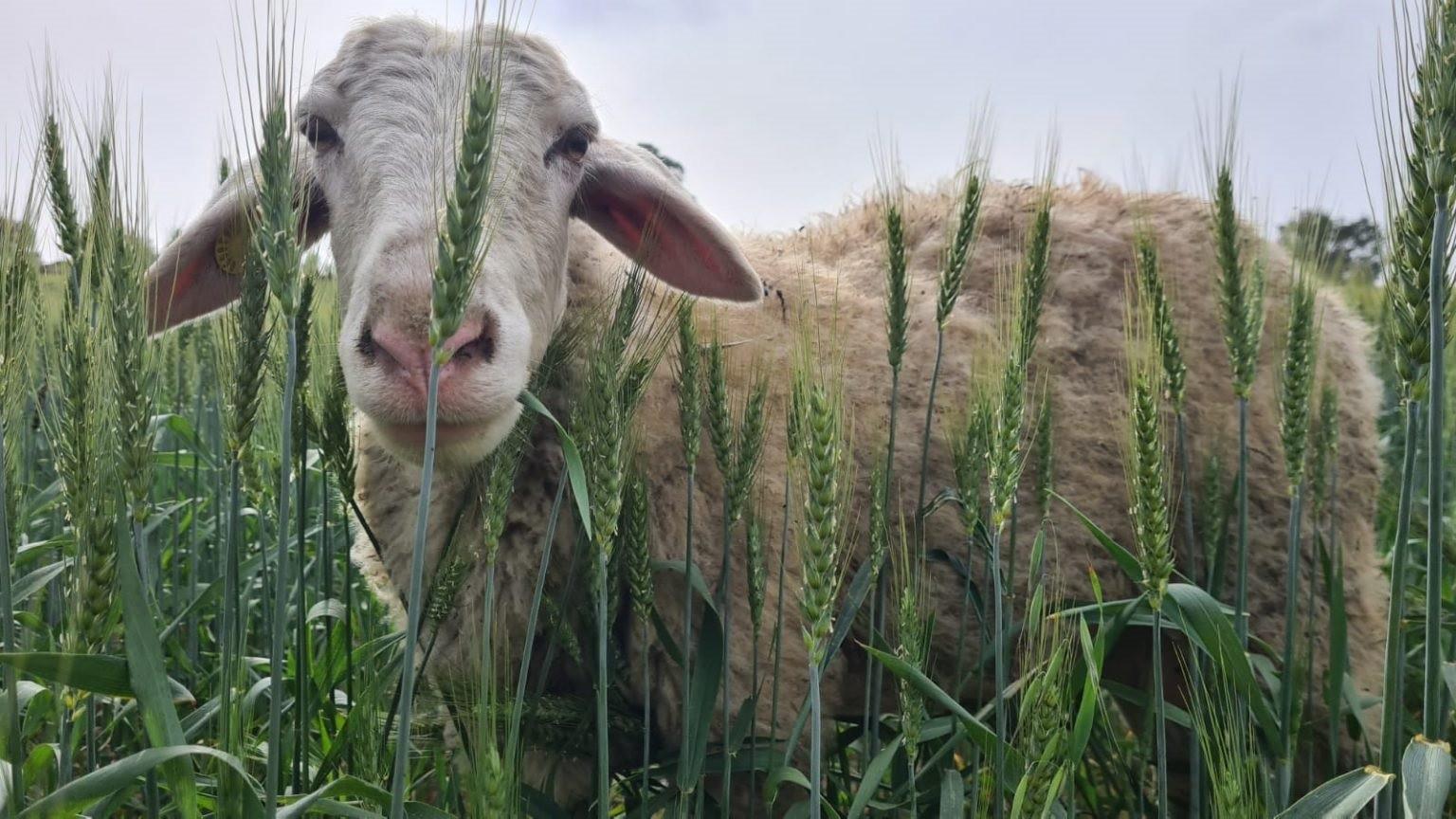 תחרות צילומים גלריה חקלאית