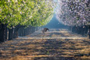 תמונות החקלאות והטבע ישראל