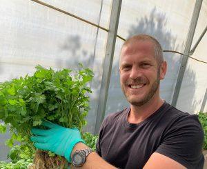 גידול הידרופוני של ירקות