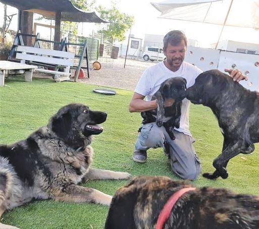 משפחת השומרים הכלבים באמצע אימון אילוף