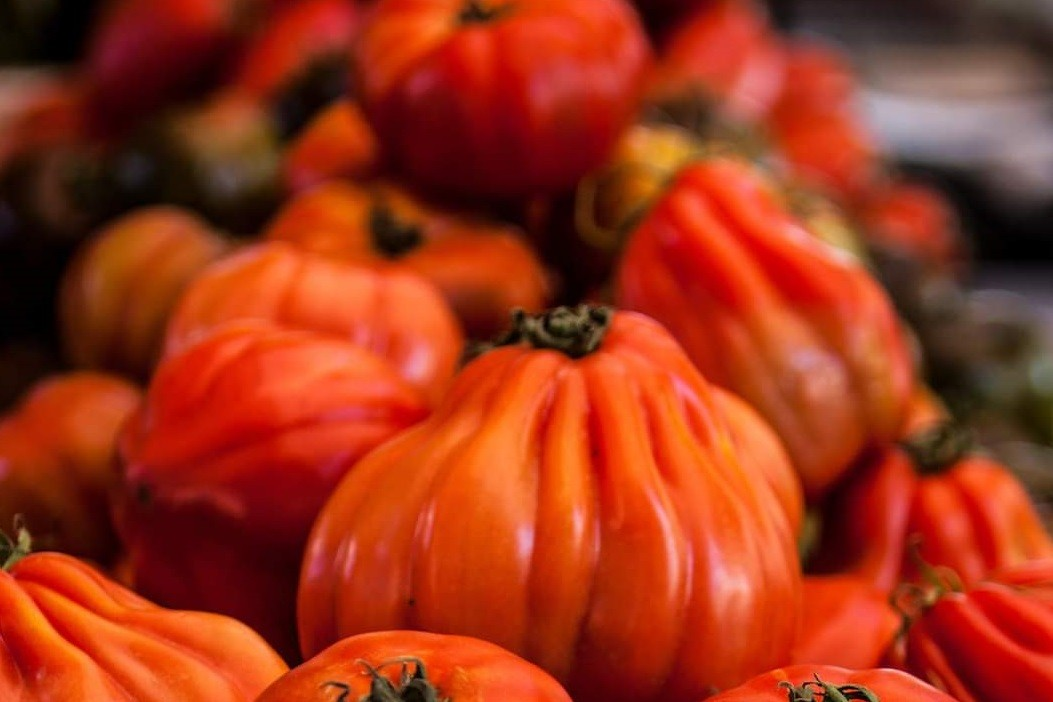 עגבניות מזן שור זרעי מורשת