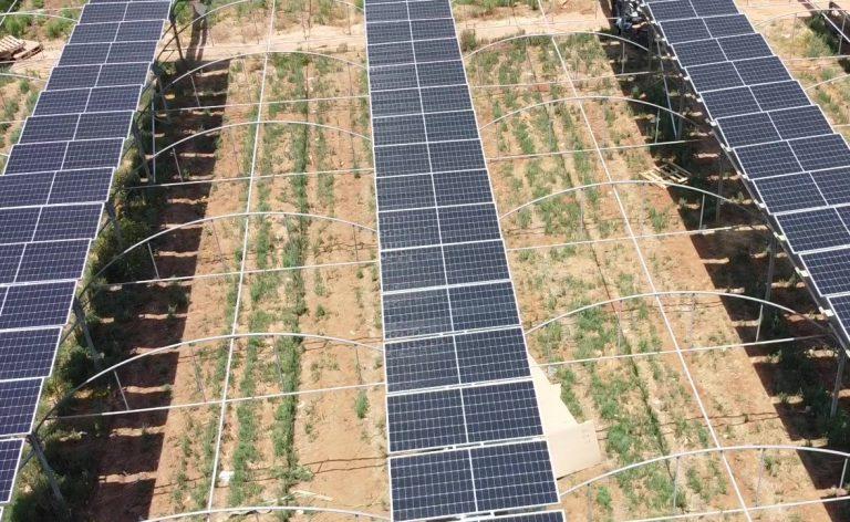 פאנלים סולארים בחקלאות