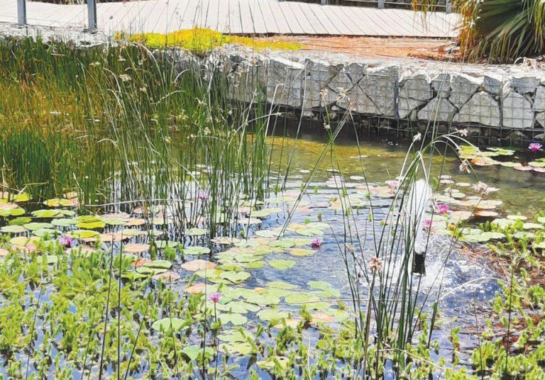 פארק ירוק ומים לחקלאות