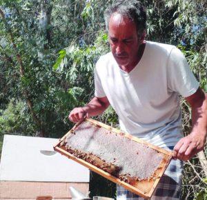 גידול דבורים בשיטה ביו דינאמית