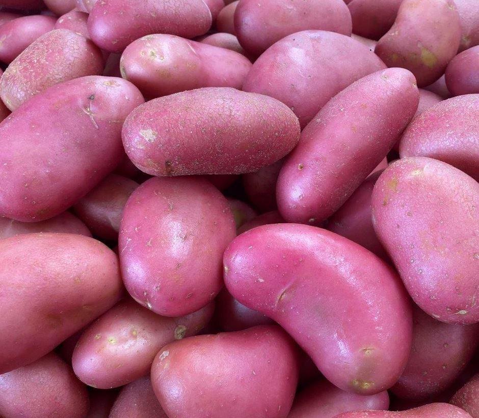 תפוח אדמה של חקלאי גרנות