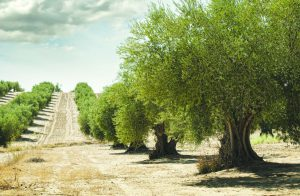 כפר טרומן צילום שאטרסטוק