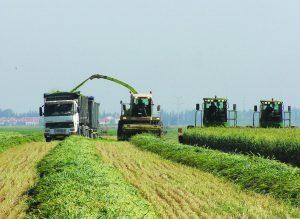 אגודה שיתופית חקלאית