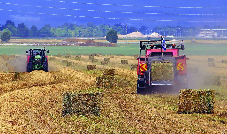 קומביינים של אלצ אגודה שיתופית חקלאית עוטפים את החציר